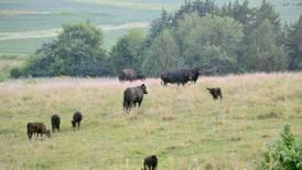 Summer heat brings crop and livestock diseases